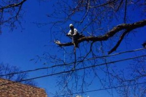 Photo #10: FREDY'S TREE SERVICES. FULLY INSURED! TREE TRIMMING AND REMOVAL