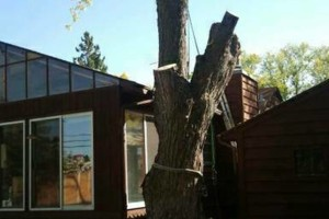 Photo #9: FREDY'S TREE SERVICES. FULLY INSURED! TREE TRIMMING AND REMOVAL