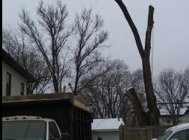 Photo #7: FREDY'S TREE SERVICES. FULLY INSURED! TREE TRIMMING AND REMOVAL