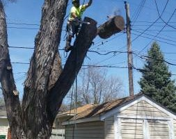 Photo #6: FREDY'S TREE SERVICES. FULLY INSURED! TREE TRIMMING AND REMOVAL