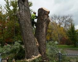 Photo #5: FREDY'S TREE SERVICES. FULLY INSURED! TREE TRIMMING AND REMOVAL