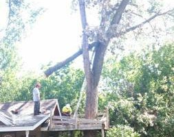 Photo #2: FREDY'S TREE SERVICES. FULLY INSURED! TREE TRIMMING AND REMOVAL