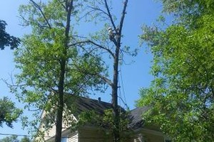 Photo #2: Elite Tree & Outdoor Services, LLC (tree service)