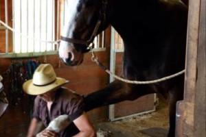 Photo #1: Master Horse Farrier