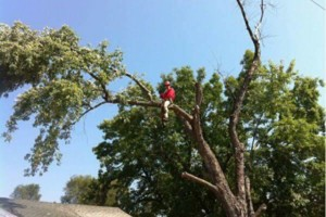 Photo #1: Jake's Top Notch Tree Service LLC