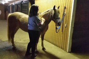 Photo #4: Orange Rose Stables. Horseback Riding Lesson