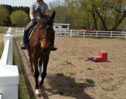 Photo #7: Orange Rose Stables. Horseback Riding Lesson
