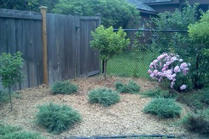 Photo #4: Joes Garden Design and maintenance