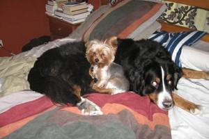 Photo #18: PET GUEST ANIMAL INN
