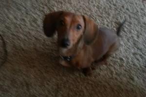 Photo #15: PET GUEST ANIMAL INN