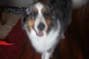 Photo #13: PET GUEST ANIMAL INN