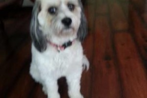 Photo #11: PET GUEST ANIMAL INN