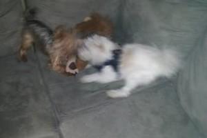 Photo #8: PET GUEST ANIMAL INN