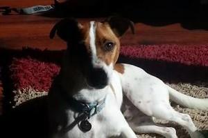 Photo #7: PET GUEST ANIMAL INN