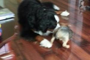 Photo #6: PET GUEST ANIMAL INN
