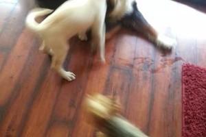Photo #4: PET GUEST ANIMAL INN