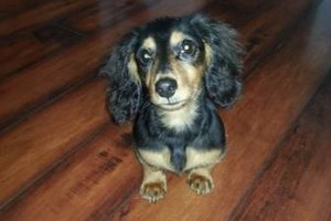 Photo #3: PET GUEST ANIMAL INN