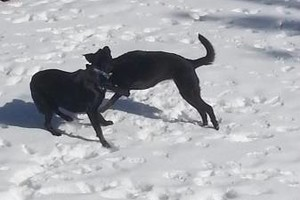 Photo #1: PET GUEST ANIMAL INN