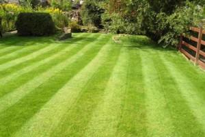 Photo #2: SIMY's Lawn Service