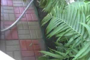 Photo #3: Yard & Garden Services - $20/hr