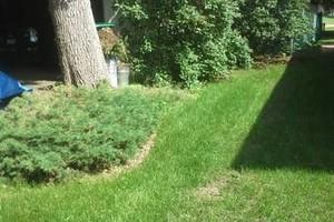 Photo #2: Yard & Garden Services - $20/hr