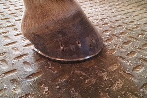 Photo #3: FARRIER SERVICES (15 years experience)