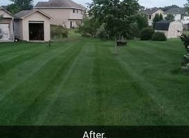 Photo #2: Pristine Lawns. Offering Lawn Service at a Great Price!