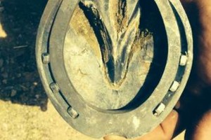 Photo #1: Reliable, Skilled Certified Journeyman Farrier