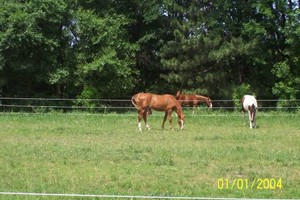 Photo #3: Horse Boarding in Beautiful Annandale Minnesota