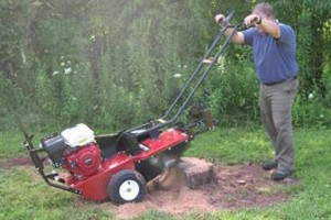 "Photo #1: Stump Grinding $50 (24"" wide)"