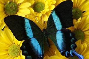 Photo #1: Blue Butterfly Cleaning Services