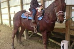 Photo #1: Riding lessons beginner to advanced