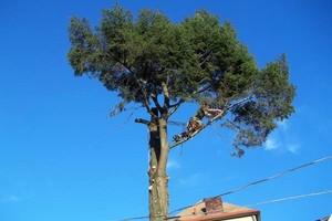 Photo #1: PITTSBURGH AREA TREE SERVICE