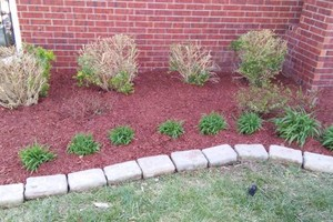 Photo #6: Anthony landscaping! Special on mulching in April!