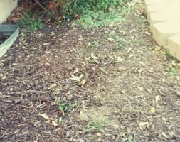 Photo #3: Anthony landscaping! Special on mulching in April!