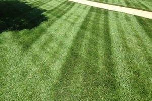 Photo #4: Commercial Lawn Service - Mowing, Edging, Trimming