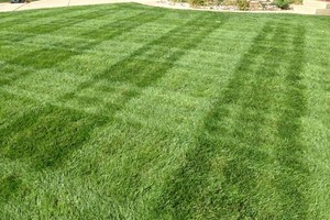 Photo #3: Commercial Lawn Service - Mowing, Edging, Trimming