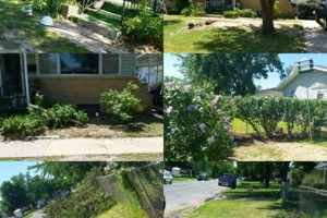 Photo #2: Roger That Lawn & Tree service