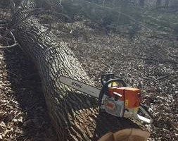 Photo #1: Dirt work, tree removal, pasture clearing