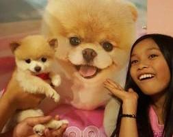 Photo #1: Doggy Doos Grooming
