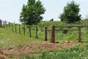 Photo #2: AG Fence Services / Pasture-clearing/ Hedge Posts