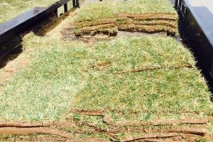 Photo #2: Extra Sod by WICHITA MOWING & LANDSCAPES