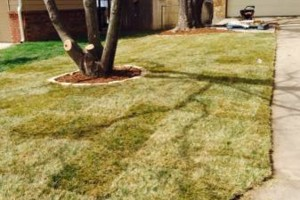 Photo #1: Extra Sod by WICHITA MOWING & LANDSCAPES