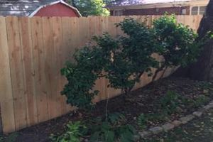 Photo #2: Privacy Fencing and Decks