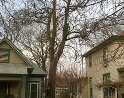 Photo #4: DandT's TREE SERVICE. FULLY INSURED!