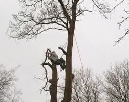 Photo #3: DandT's TREE SERVICE. FULLY INSURED!