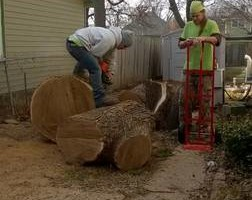 Photo #2: DandT's TREE SERVICE. FULLY INSURED!