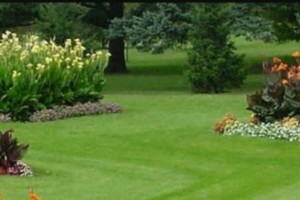 Photo #6: LOW COST JAMES LAWN & PROPERTY CARE / TREE SERVICE. $20 - $30 PER VISIT
