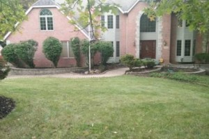 Photo #5: LOW COST JAMES LAWN & PROPERTY CARE / TREE SERVICE. $20 - $30 PER VISIT