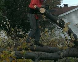 Photo #3: LOW COST JAMES LAWN & PROPERTY CARE / TREE SERVICE. $20 - $30 PER VISIT
